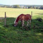 Pony grasend