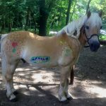 geduldiges Pony