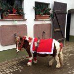Advents Ponyreiten