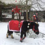 Ponybanden Weihnacht